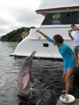 Feeding the pink dolphin