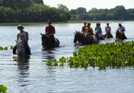 Cavalgada - Horseback- riding - Pantanal / MS